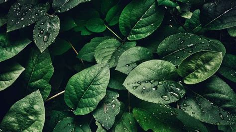 Green Aesthetic Wallpapers: 20+ Images - Wallpaperboat
