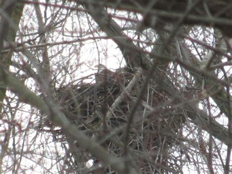 Nesting eagles return to Cleveland: Cheer of the Day