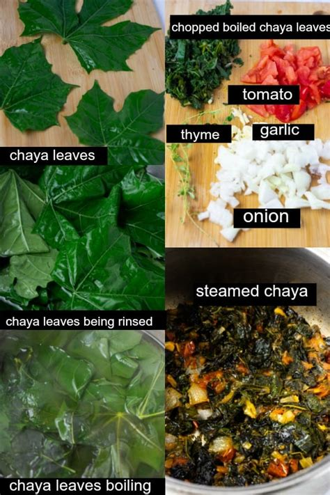 Steamed Chaya - Spinach Tree - Healthier Steps